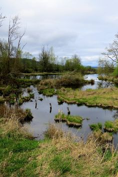 Nisqually National Wildlife Refuge in Washington