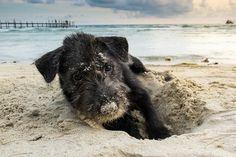 Playas, embalses, ríos…para ir con tu  perro, y alojamientos #dogvivant.