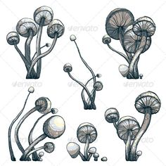 Cramped Toadstool Mushrooms Composition Collection - Flowers & Plants Nature