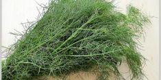 Arapsaçı Otu, Kullanımı ve Faydaları Food And Drink, Herbs, Herb, Medicinal Plants