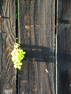 Grapes on a Door, photo by...?