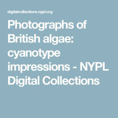 Photographs of British algae: cyanotype impressions - NYPL Digital Collections