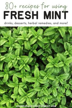 Mint Recipes, Herb Recipes, Real Food Recipes, Cooking Recipes, Herbal Remedies, Natural Remedies, Mint Herb, Mint Plants, Healing Herbs