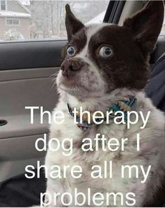 funny animal pics Funny Animal Pictures Of The Day 24 Pics - Funny Animals - Daily LOL Pics Funny Animal Jokes, Funny Dog Memes, Funny Animal Pictures, Cute Funny Animals, Funny Cute, Really Funny, Funny Photos, Funny Dogs, Funny Animal Sayings