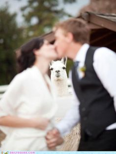 With the power vested in me, by the awesome state of Llama, I now pronounce you husband and wife. You may kiss your bride.