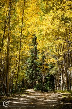 autumn on Ironton Road, Ouray, Colorado