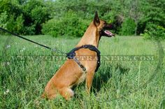 Purchase this Studded Leather Dog Harness for stylish walking of your pet! Y-shaped chest is adorned with silver-like cones for fashion look. Leather Harness, Dog Harness, Dog Leash, Hyperactive Dog, Dog Training Equipment, Dog Muzzle, Leather Conditioner, Belgian Malinois, Cane Corso