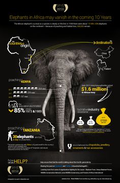 Intriguing African Elephant Population Statistics The African Elephant is one of the world's most majestic land creatures. These animals have been shown to have incredible intelligence, great social capacities, and even long memories. Their behavior could