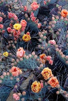 Cacti and flowers.