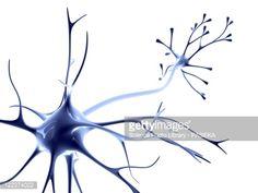 Stock Illustration : Nerve cell