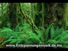 Jungle Sounds Without Music. Relaxation Music. Sonidos de la Selva - YouTube