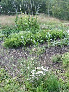 hagen for dyrking av varige verdier