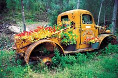 Nasturtiums in unlikely place: back of old yellow truck.