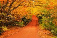 A Quiet Beauty:  PRINCE EDWARD ISLAND in CANADA has breath-taking AUTUMN foliage, with some of its best views showcased along a series of back country drives knows as the Scenic Heritage Roads. These remote roads are made of red clay that matches the leaves' hues, and trees often meet over the throughways, creating a tunnel of autumn color.