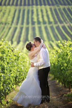Wedding, vineyard, Tokaj, Hungary