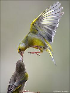 Liebe ist... - Bild & Foto von Stefan Rieben aus Tiere - Fotografie (19986816) | fotocommunity