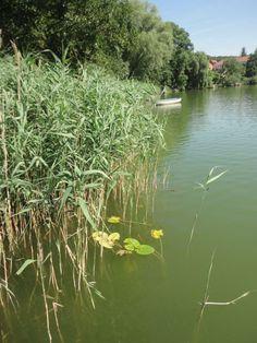 Summer in Buckow Germany, River, Landscape, Summer, Outdoor, Outdoors, Scenery, Summer Time, Deutsch