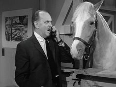Mister Ed: Season Episode 5 Ed and the Allergy Oct. Mister Ed, Classic Comedies, Tv Westerns, Episode 5, Classic Tv, Back In The Day, Season 3, Short Stories, Pallets