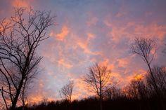 #Clouds #trees #alberi #nuvole #tramonto #sunset