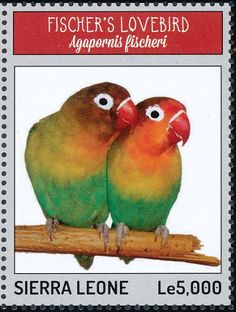 Sellos Lovebird de Fischer - Principalmente fotos
