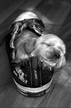 Puppy and his shoe