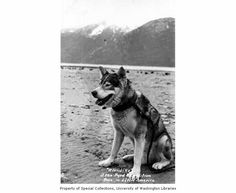 Portrait of a dog named Klondike, that Antarctic explorer Richard E. Byrd brought on one of his expeditions, Alaska, n.d.