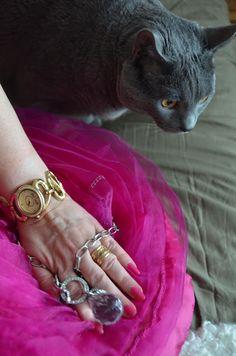 Ilvesmäen Rouva: Kuvassa kissa, silkkityyny sekä koruja - Kuva Riit... Kissa, Lady