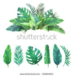 Bright set of tropical leaves.