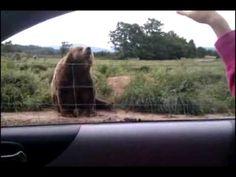 Un ours qui vous salut
