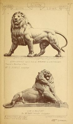 Materials and documents of architecture and sculpture : classified alphabetically Animal Sculptures, Sculpture Art, Animal Drawings, Art Drawings, Lion Art, Drawing Sketches, Lions, Art Reference, Concept Art