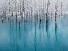 「青い池」  撮影したのは、北海道美瑛町在住の日本人カメラマン白石健人さん。  季節は初雪が池に降る10月下旬です。