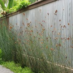 Cat Fencing with galvanized corrugated metal fro Home Depot {the grass is: Thamnochortus insgnis thrashing reed}