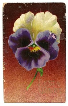 Vintage 1911 Floral Best Wishes Pansy Postcard / Pansies make me smile..such happy faces!