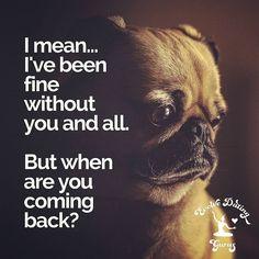 #tagyourcrush #love #dating #evolvedating #crush #puppylove #missingyou #cuteanimals #pug