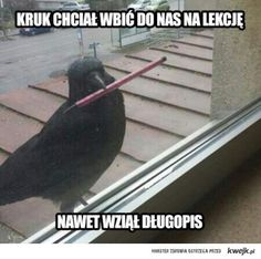 The Best Funny Pictures Of Today's Internet A crow tried to go in our class room and he had a pen he's more prepared than half the kids in my school Funny Pictures For Kids, Funny Photos, Funniest Pictures, School Humor, Mom Humor, Funny Babies, Funny Kids, Wtf Funny, Funny Memes