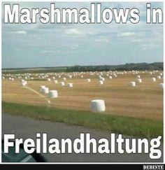Marshmallows in Freilandhaltung