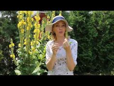 Přírodní kosmetika recepty blog o výrobě přírodní kosmetiky Health Fitness, Youtube, Gardening, Blog, Lawn And Garden, Blogging, Fitness, Youtubers, Youtube Movies