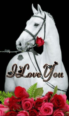 I Love You Pictures, Love You Gif, Beautiful Love Pictures, Beautiful Gif, Pretty Horses, Beautiful Horses, Dove Pictures, Image Couple, Night Sky Photos