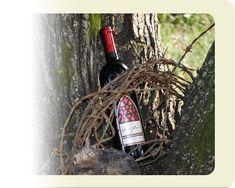 St. Paul Mountain Vineyards 588 Chestnut Gap Road  |  Hendersonville, North Carolina 28792