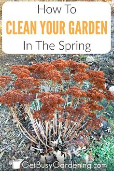 Spring Garden Clean Up Checklist & Cleaning Tips Taking the time for spring yard clean up will make summer maintenance much easier, a clean garden i Deep Cleaning Tips, House Cleaning Tips, Spring Cleaning, Cleaning Hacks, Organic Gardening, Gardening Tips, Vegetable Gardening, Balcony Gardening, Indoor Gardening