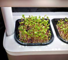 First Look at MicroFarm ONE+ - Micro Farming