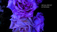 #Aesthetic #purple #deep #dark #rose