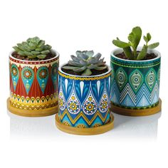 Succulent Plant Pots - 3 Inch Mandalas Pattern Cylinder Ceramic Planter for Cactus, with Drainage Hole, Bamboo Trays, Perfect Gift Idea, Set of 3 cacti succulent containers Small Potted Plants, Small Succulents, Succulent Pots, Planting Succulents, Indoor Plants, Plant Pots, Succulent Containers, Indoor Succulents, Growing Succulents