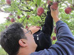 Go Explore Nature: Apple Picking at Los Rios Rancho in Oak Glen