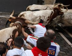 Running of the bulls: The most shocking photographs Pamplona hosts its infamous running of the bulls – part of the annual San Fermin festival – once again  -  July 7, 2017:     A steer hits a participant's head with its horn on the first day of the San Fermin bull run festival in Pamplona