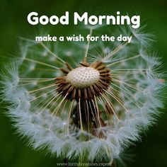 Good Morning! Make a wish for the day.