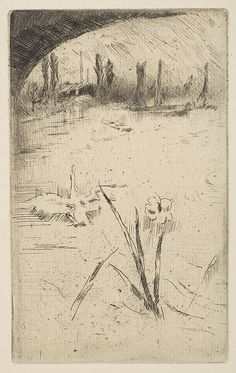 James McNeill Whistler (American, 1834–1903). Swan and Iris. [1883]. The Metropolitan Museum of Art, New York. Bequest of Grace M. Pugh, 1985 (1986.1180.1590) #iris #flower