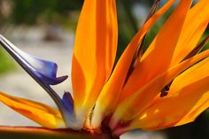 Bird of Paradise plant is easy to care. Strelitzia is an outdoor flowering plant. Outdoor Flowering Plants, Strelitzia Plant, Birds Of Paradise Plant, Plant Health, Types Of Soil, Plant Care, Flower Making, Planting Flowers, Beautiful Flowers