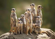 Atlanta Zoo, Houston Zoo, Live Animals, Funny Animals, Reptiles, Willow Tree Family, Zoo Photos, Animal Experiences, Funny Animal Humor