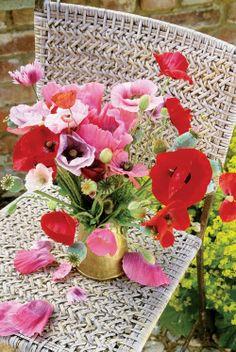 ZsaZsa Bellagio: Flower Fabulous